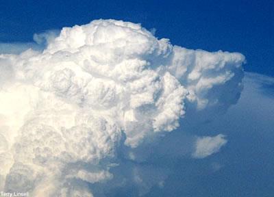 don bosco y perro nube