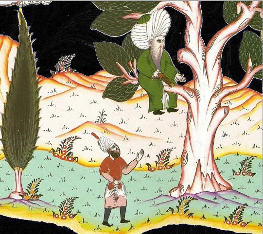 Nasrudin y la rama 4