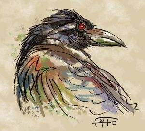 cuervo fito
