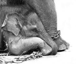 elefante zack2