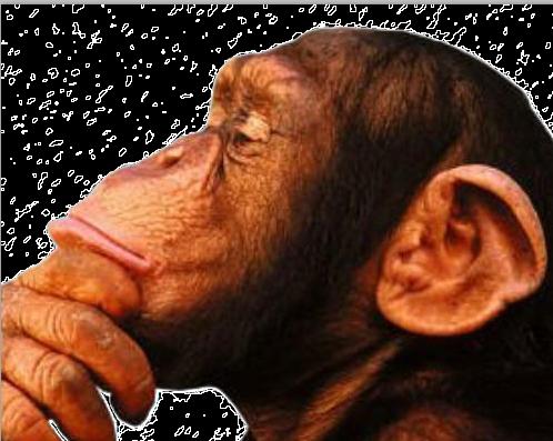 torneo de canto mono 2