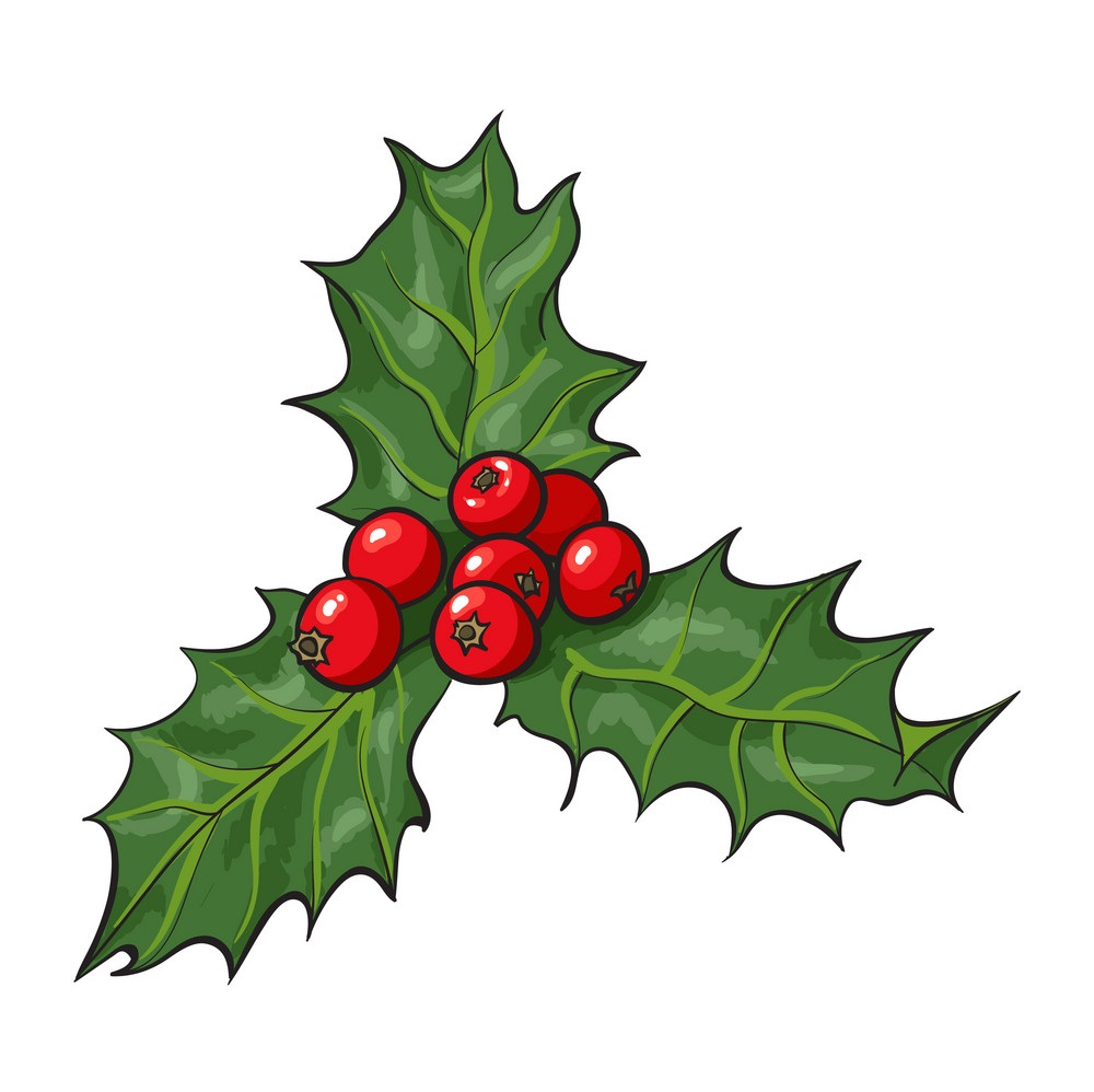 mistletoe-branch-with-leaves-and-berries-vector-17447242