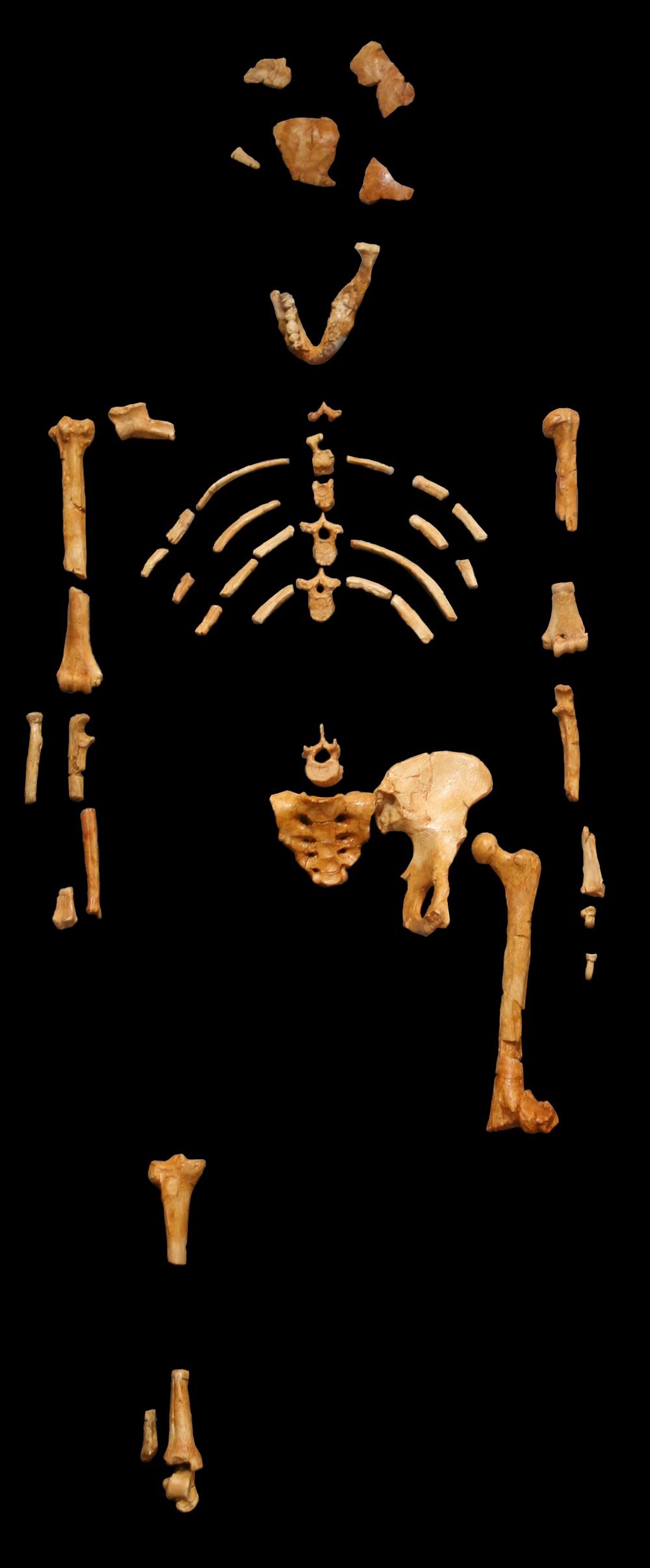 Lucy esqueleto